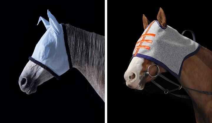 338192 Грация прекрасных лошадей в фотопроекте Equus