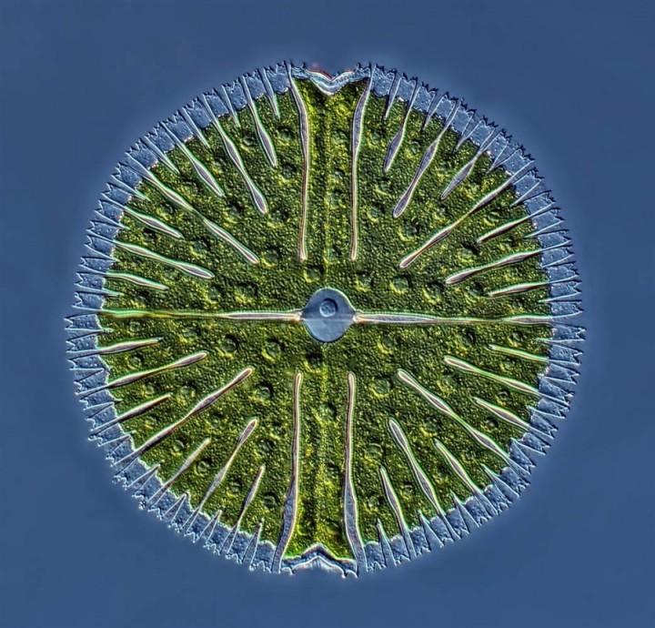bioscapes06 Победители конкурса Olympus BioScapes 2012
