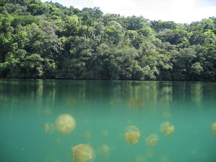 12101 Озеро медуз