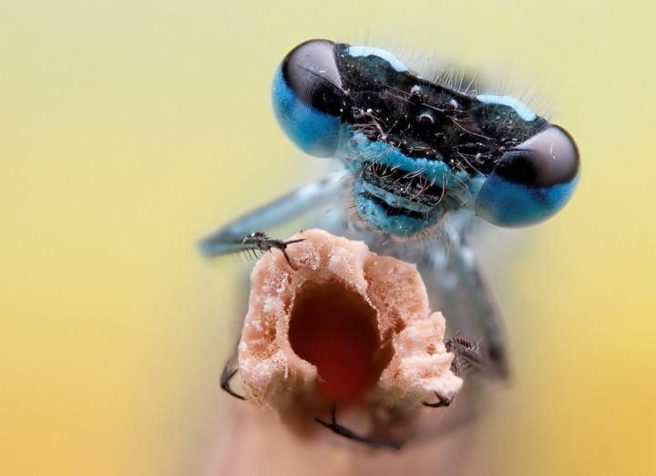 insects26 Портреты насекомых