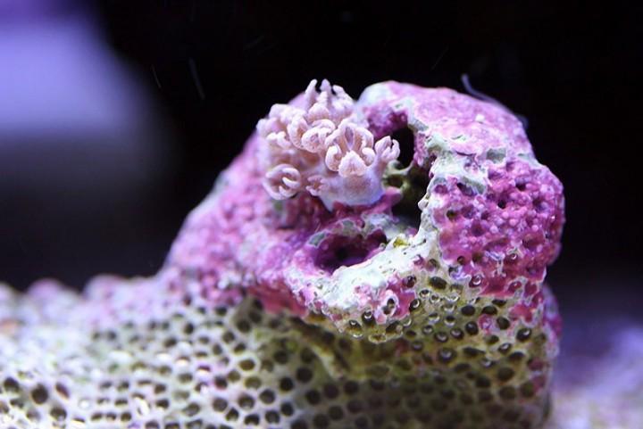 Макро фотографии подводного мира