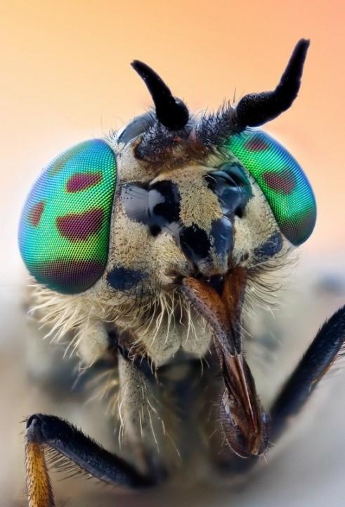 insects35 Портреты насекомых