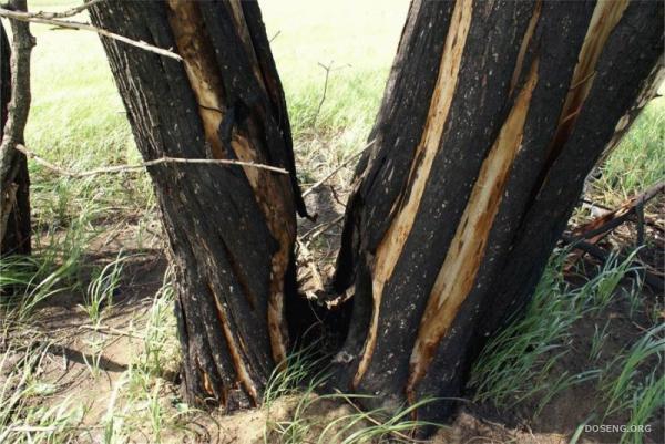 Медведицкая гряда, аномальная зона (27 фото)