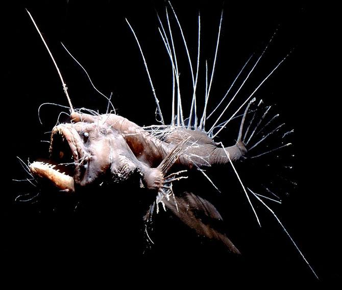 Топ-10 самых причудливых рыб мирового океана