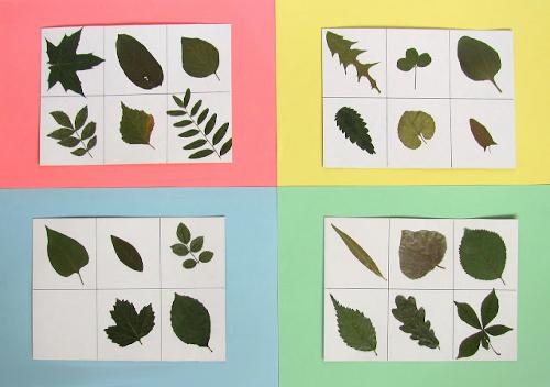 Оригинальный гербарий из листьев фото