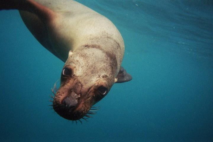 47 Удивительный подводный мир