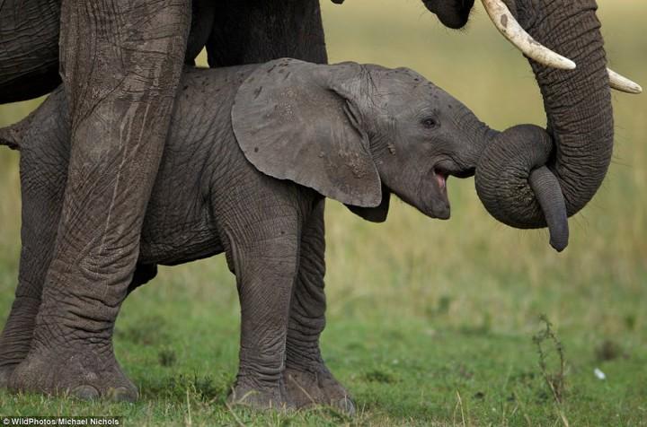 bestofwild15 Лучшие фотографии диких животных за 2013 год