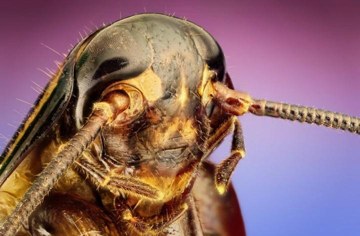 insects04 Портреты насекомых