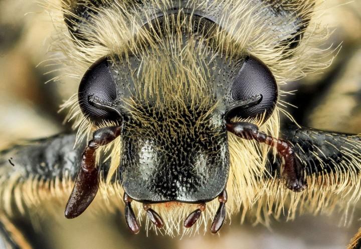 Insects17 Прекрасные насекомые