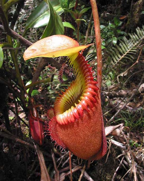Cтранные, редкие и просто прикольные растения.