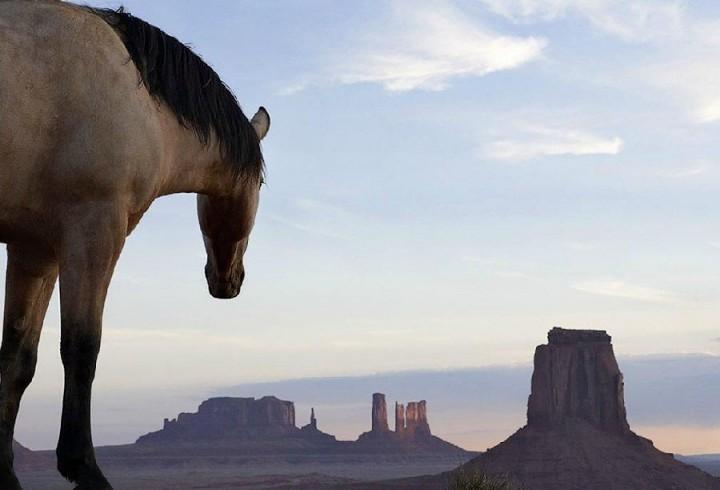 Tim Flar Грация прекрасных лошадей в фотопроекте Equus