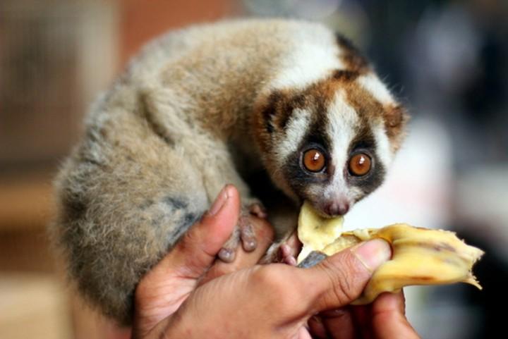 coolanimals 5 Животные, которым не страшен апокалипсис