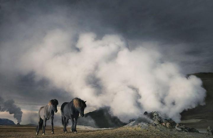 Horsei 25 Грация прекрасных лошадей в фотопроекте Equus