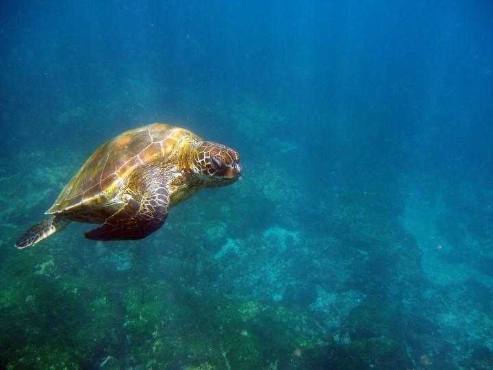 133 Удивительный подводный мир