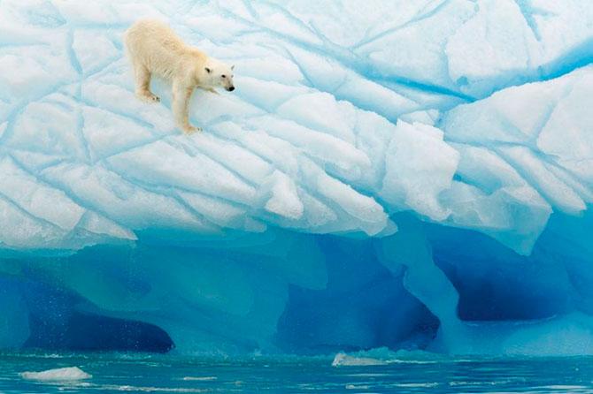 Животные под угрозой исчезновения