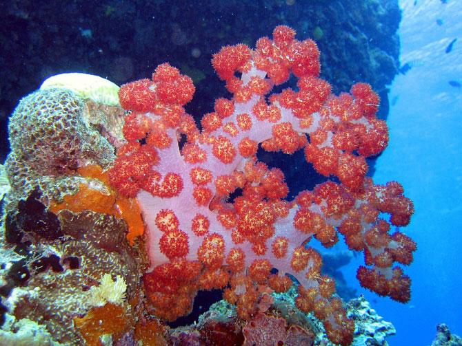 Кораллы - древнейшие существа на Земле