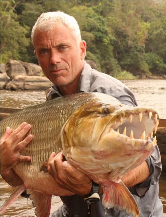 ruba goliaf14 757x990 Водный монстр из Африки   Тигровая рыба Голиаф