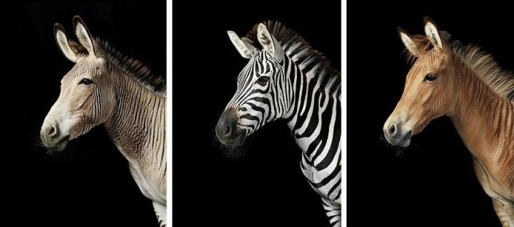 Tim Flak Грация прекрасных лошадей в фотопроекте Equus